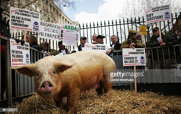 Winnie the pig joins pig farmers in their protest outside Downing St on March 4 2008 in London England Pig Farmers gathered to protest as...