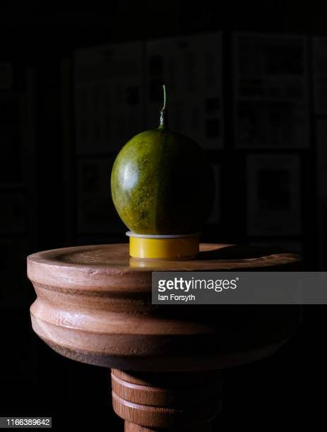 A winning and world record breaking gooseberry grown by Graeme Watson and weighing 36 grams and 12 grains is displayed on a pedestal during the...