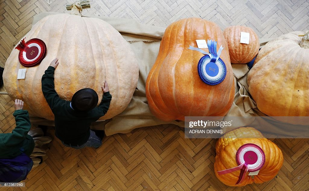 Winning pumpkin grower Ben BenEliezer (2L), hugs his pumpkin, grown for the Royal Horticultural Society (RHS) Harvest Festival show in London on October 4, 2016. The winning pumpkin was grown by Ben BenEliezer weighing in at 566Kg. / AFP / ADRIAN
