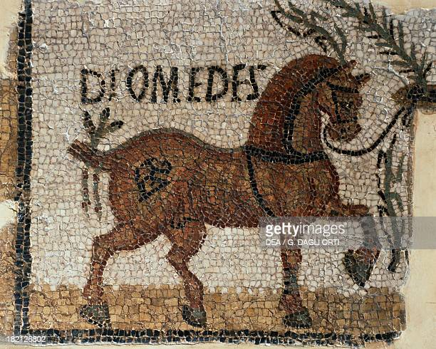 Winning racehorse named Diomedes detail of a mosaic uncovered in Sidi Abdallah Tunisia Roman Civilisation 4th century Tunis Musée National Du Bardo