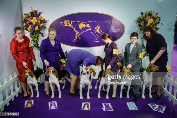 Winning Treeing Walker Coonhounds pose for a group picture at the 142nd Westminster Kennel Club Dog Show at The Piers on February 12 2018 in New York...