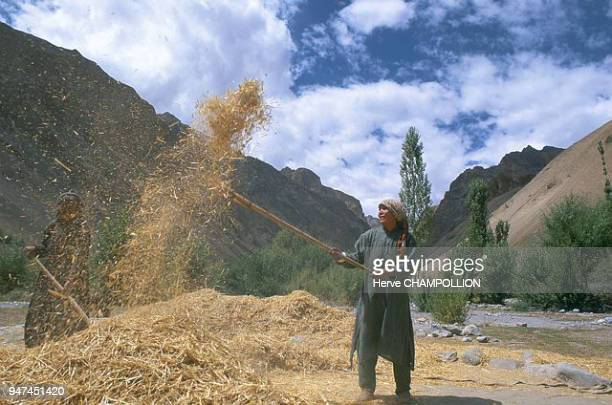 Winnowing In the high valleys of Ladakh there are many mutual aid associations One of them linked to work consists in putting to work the men animals...