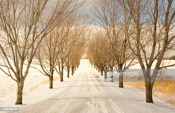 Winter Afternoon - Horizontal