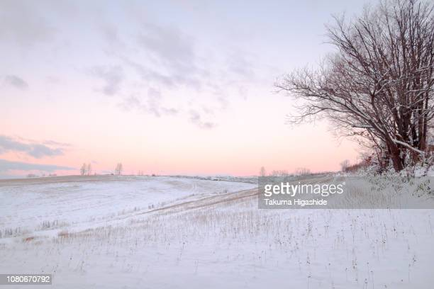 winter air - biei town stock pictures, royalty-free photos & images