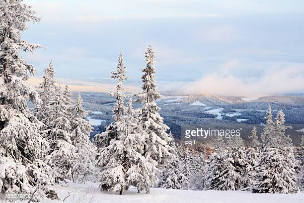 winter and snow covered trees in trysil mountain, norway - pejft stock pictures, royalty-free photos & images
