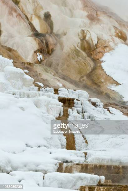Winter at Mammoth Hot Springs in Yellowstone National Park in Wyoming