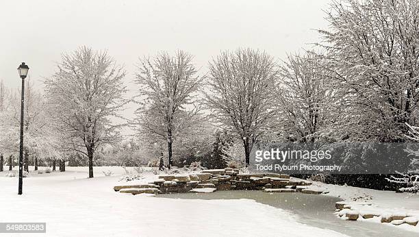 winter at the pond - deciduous tree stock pictures, royalty-free photos & images