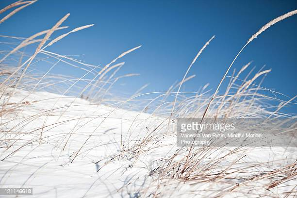 winter beach - vanessa van ryzin stockfoto's en -beelden