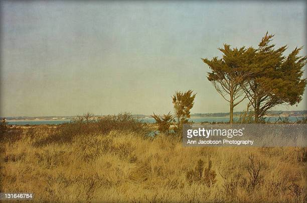 winter beach - sag harbor stock photos and pictures