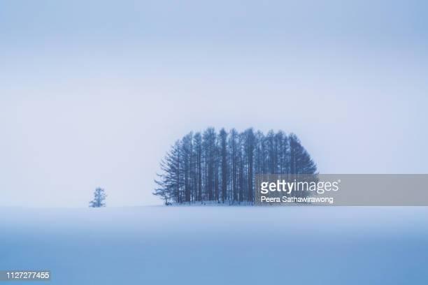 winter biei - hokkaido stock pictures, royalty-free photos & images