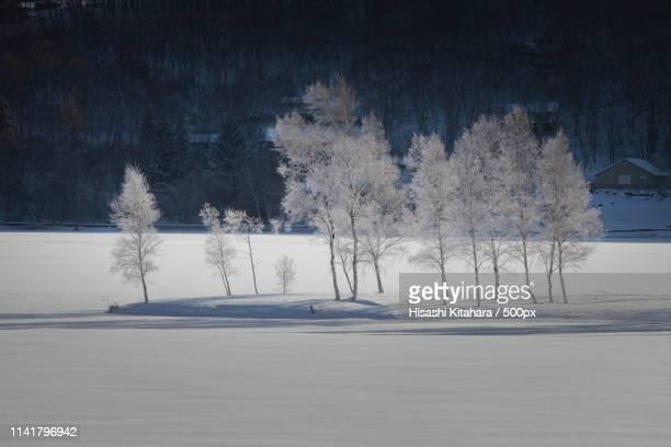 winter birch - 諏訪市 ストックフォトと画像