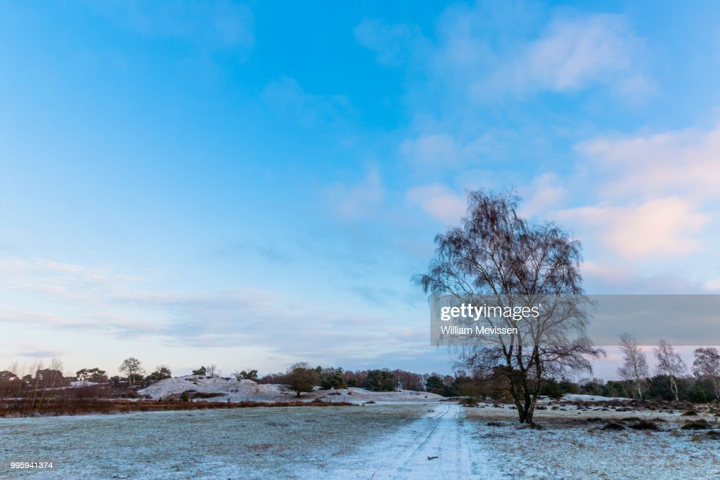 Winter Birch : Stockfoto