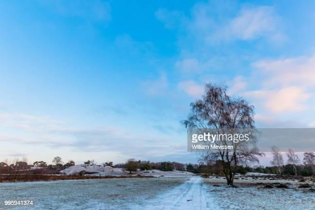 winter birch - william mevissen stock pictures, royalty-free photos & images