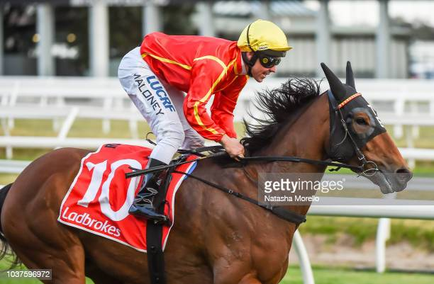 Winter Bride ridden by Ryan Maloney wins the Ladbrokes Odds Boost Stakes at Caulfield Racecourse on September 22 2018 in Caulfield Australia