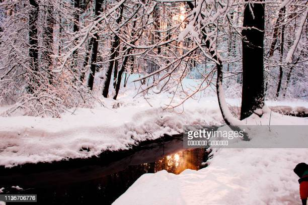 winter christmas forest landscape. blue sky, trees covered with frost, small river with reflection of sun in water. - southern christmas stock pictures, royalty-free photos & images