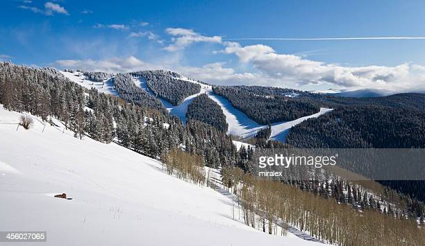 Winter Coniferous and Aspen Forest Covered by Snow
