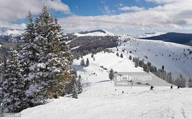 Winter Coniferous Forest Covered by Snow with Skiing Slopes