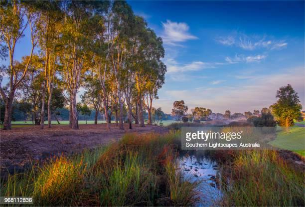 winter dawn with rising mist, hidden grove keysborough south, victoria, australia. - victoria australia stock pictures, royalty-free photos & images