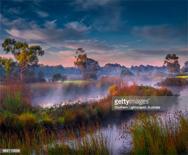 winter dawn with rising mist, hidden grove keysborough south, victoria, australia. - grove_(nature) stock pictures, royalty-free photos & images