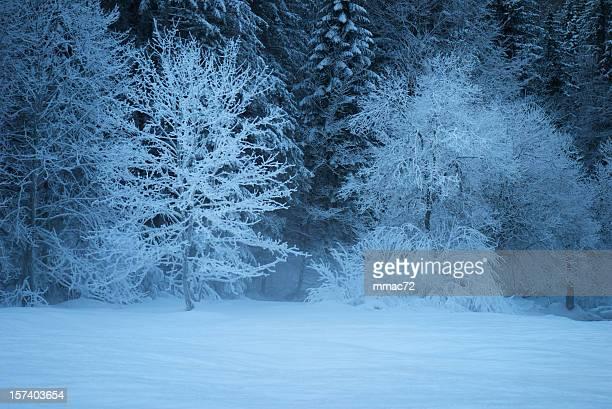 Winter mit Schnee am Abend