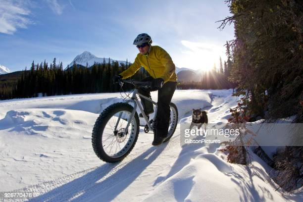 winter fat bike dog ride - shiba inu winter stock pictures, royalty-free photos & images