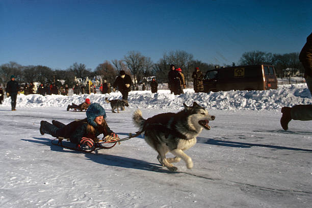Saint Paul Winter Carnival View of youth rider in action on sled pulled by dog during mutt race over frozen White Bear Lake St Paul MN CREDIT John G...