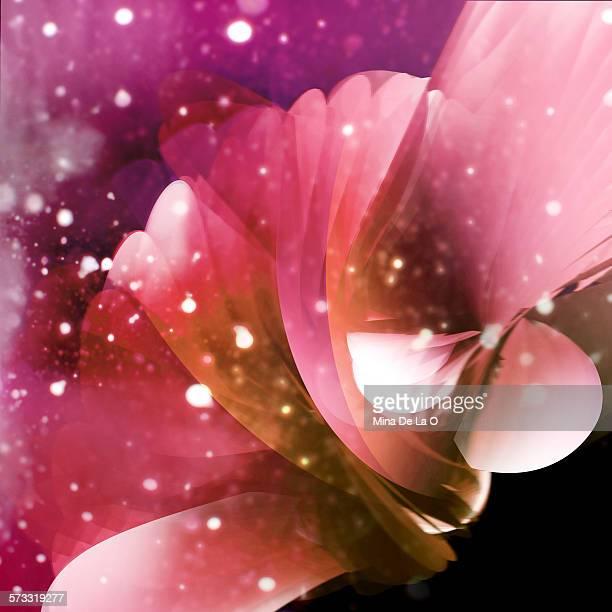 Winter Flower 01