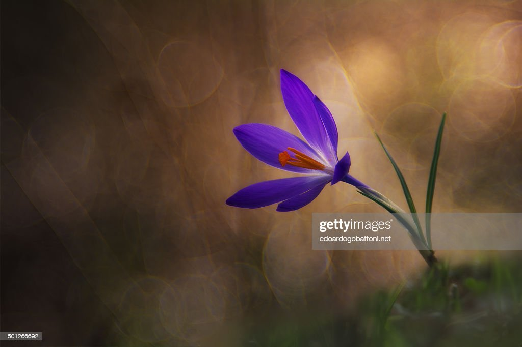winter flower : Foto stock