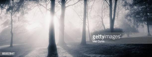 Winter fog in Volunteer Park