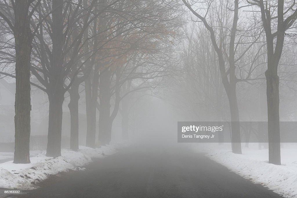 Winter Fog : Stock Photo