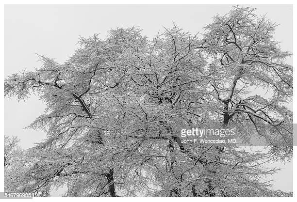 winter foliage in elizabeth park - black and white instant print stock pictures, royalty-free photos & images