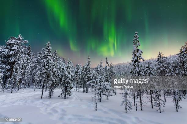 winter forest at at night under the northern lights. finland - finland stock pictures, royalty-free photos & images