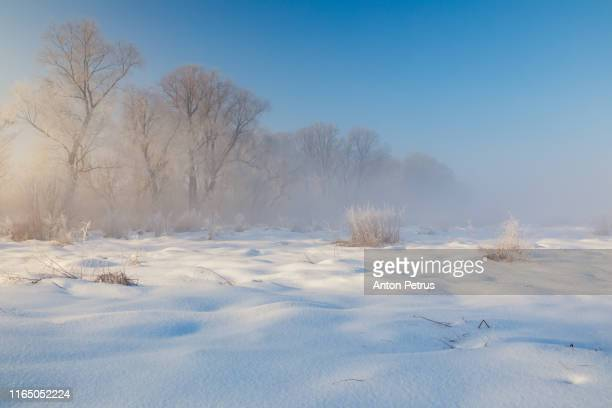winter forest at misty dawn. beautiful winter landscape, finland - poolklimaat stockfoto's en -beelden