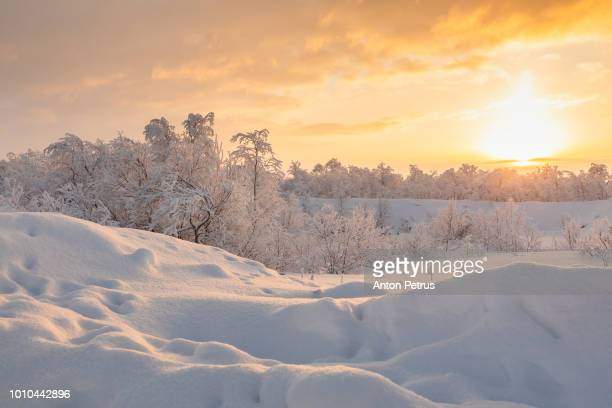 winter forest at sunset. beautiful winter landscape, finland - poolklimaat stockfoto's en -beelden