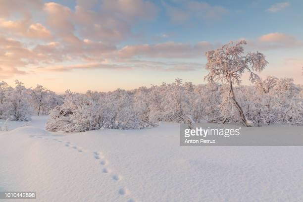 Winter forest at sunset. Beautiful winter landscape, Finland