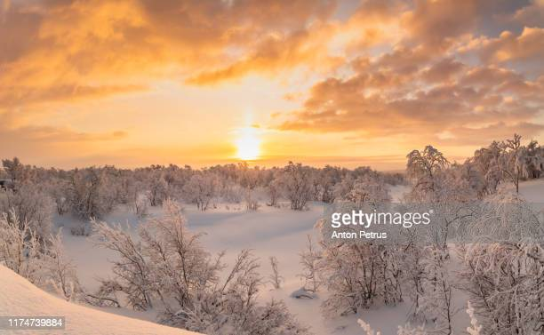 winter forest at sunset. beautiful winter landscape, finland - finlandia fotografías e imágenes de stock