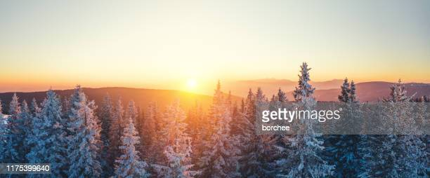 winter forest at sunset - winter stock pictures, royalty-free photos & images