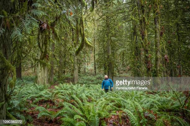 winter forest bathing, mature man hiking looking up at trees - reality fernsehen stock pictures, royalty-free photos & images