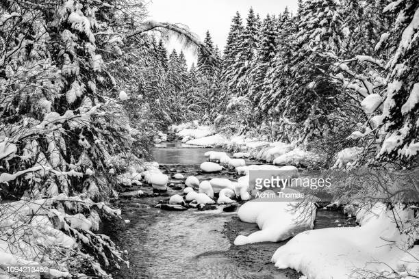 Winter Forest, Bavaria, Germany, Europe
