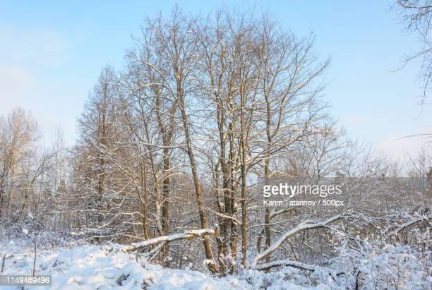 winter forest, grove, trees in the snow, frozen river - karim bonnet photos et images de collection