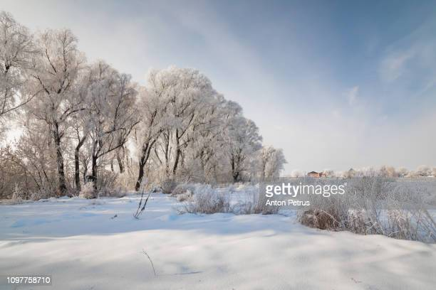winter forest in hoarfrost. beautiful winter landscape - küste stock-fotos und bilder