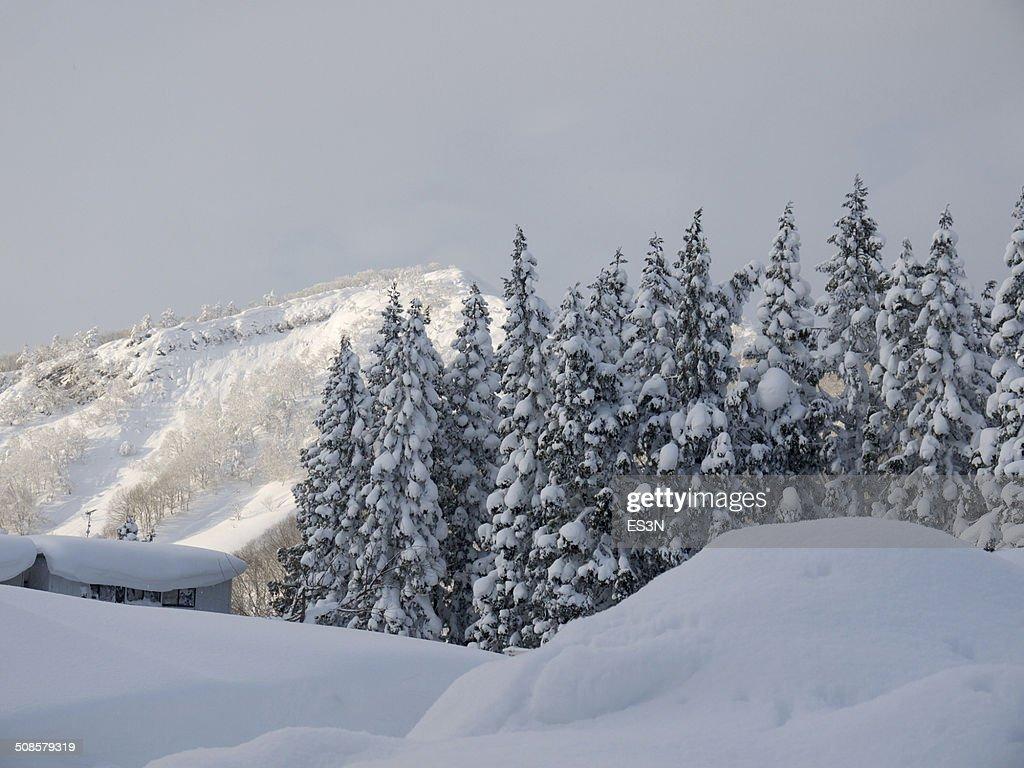 森林の冬の夜にお楽しみください。 : ストックフォト