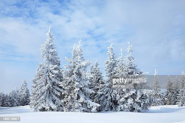 Bosque de invierno