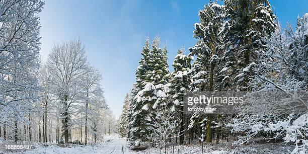 Árvores de Floresta de Inverno NevadasComment branco vivo woodland panorama