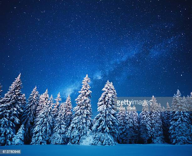 Winter Forest Under The Stars