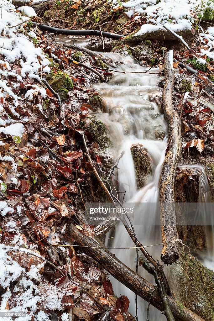 Inverno Forrest Creek : Foto de stock