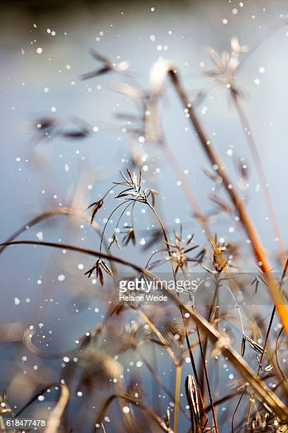 Winter fragility