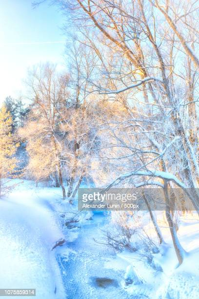 winter frost - lunin stock photos and pictures