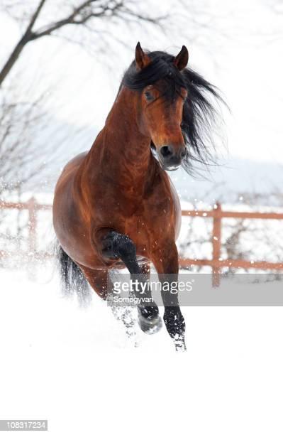 Galopp im Winter