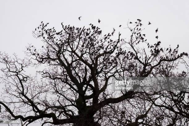 A winter garden, crown of a tree against a grey sky with birds flying past.